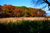 Fall Foliage, Long Island, New York, 2010