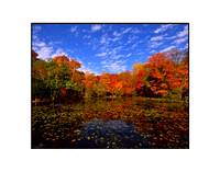 Fall Foliage, Long Island, New York 01