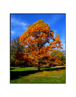 Fall Foliage, Long Island, New York 03
